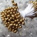 125 Gold Tipped Double Ended Stamen Peps For Bouquets