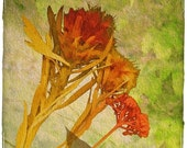 Dominance -(Watercolor Print - Fine Art - Home Decor - Nature - Floral - Botanical - Warm)