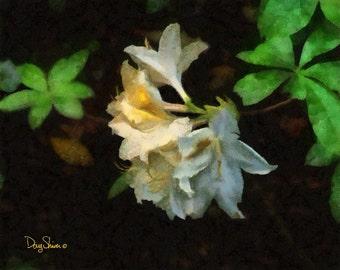 Azalea (8x10 - plant - garden - botanical - flower - nature - Butchart Gardens - wall decor - home decor)
