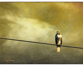 Evening Hunt (9x12 - Hawk - Bird - Earth Tones - Raptor - Birds of Prey - Hunter - Wall Decor)