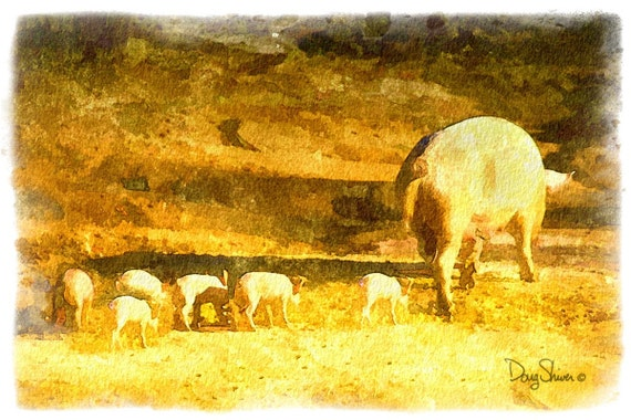 This Little Piggy (8x12 -  Rural Georgia - Back Roads - Farm - Livestock - Fine Art print - Wall Art)