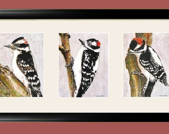 "Downy Woodpeckers 22x12"" Framed Art Prints in Triple Mat - Signed and Numbered"
