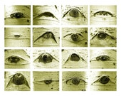 EYES IN THE FOREST note cards set of 6