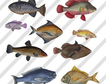 Digital Collage Sheet Colorful FISH (Sheet no.FS95) Instant Download