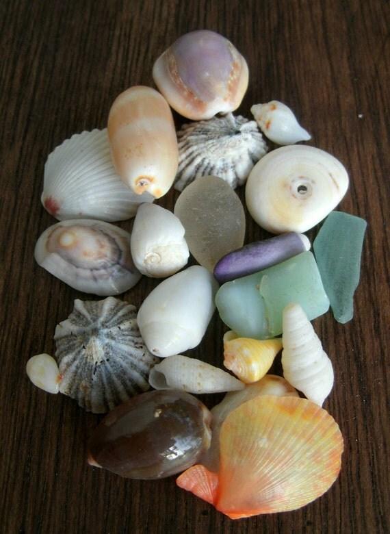 Natural Hawaiian Sea Shell, Beach Glass LOT 21MST