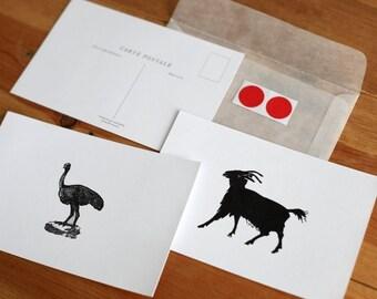 Vintage Ostridge\/Goat Carte Postale
