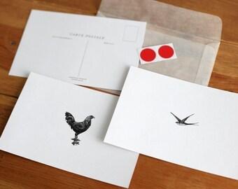 Vintage Chicken/Bird Carte Postale