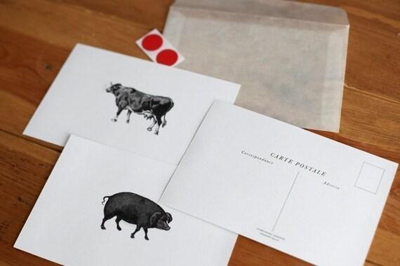 Vintage Pig/Cow Carte Postale