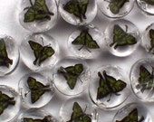 Tiger Swallowtail Butterfly Minis 90 COE Murrini Slices 15