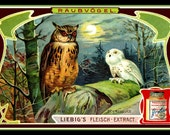 Two Owls in the Woods Refrigerator Magnet
