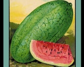 Florida Watermelon Seed Pack Refrigerator Magnet - FREE US SHIPPING