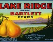 LAKE RIDGE Pear crate label, Kelseyville Lake County