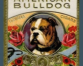 American Bulldog  Refrigerator Magnet