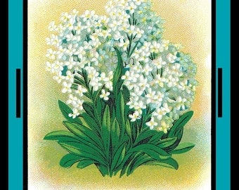 Sweet Alyssum Seed Pack Refrigerator Magnet - FREE US SHIPPING