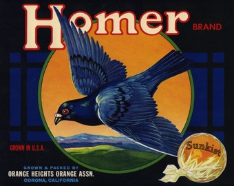 HOMER BRAND orange crate label, bird, orange on right  bird pigeon