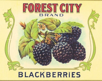 FOREST CITY Blackberries can label, deco Omaha