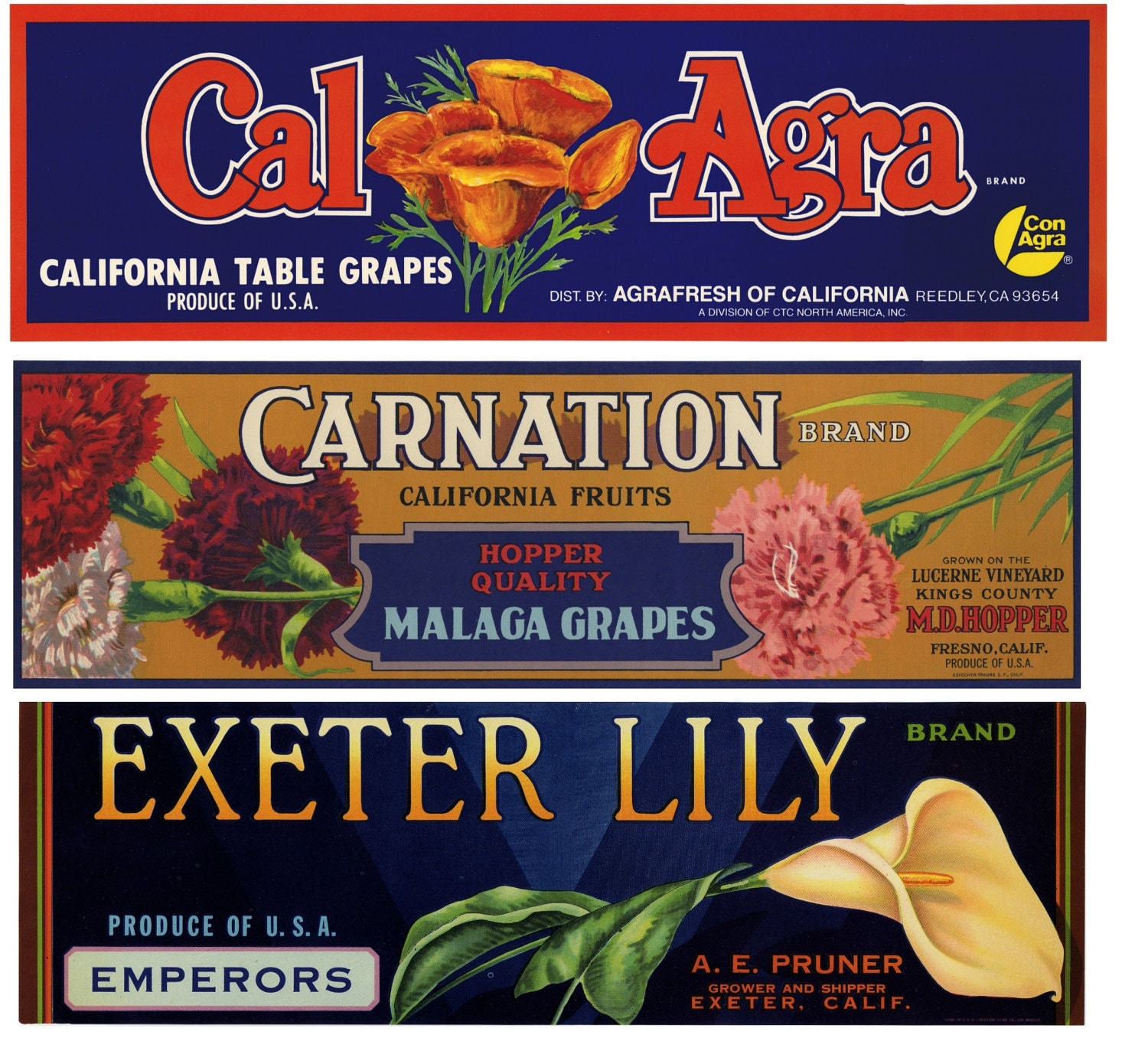 12 Vintage Grape Crate Labels With Flowers Perfect For
