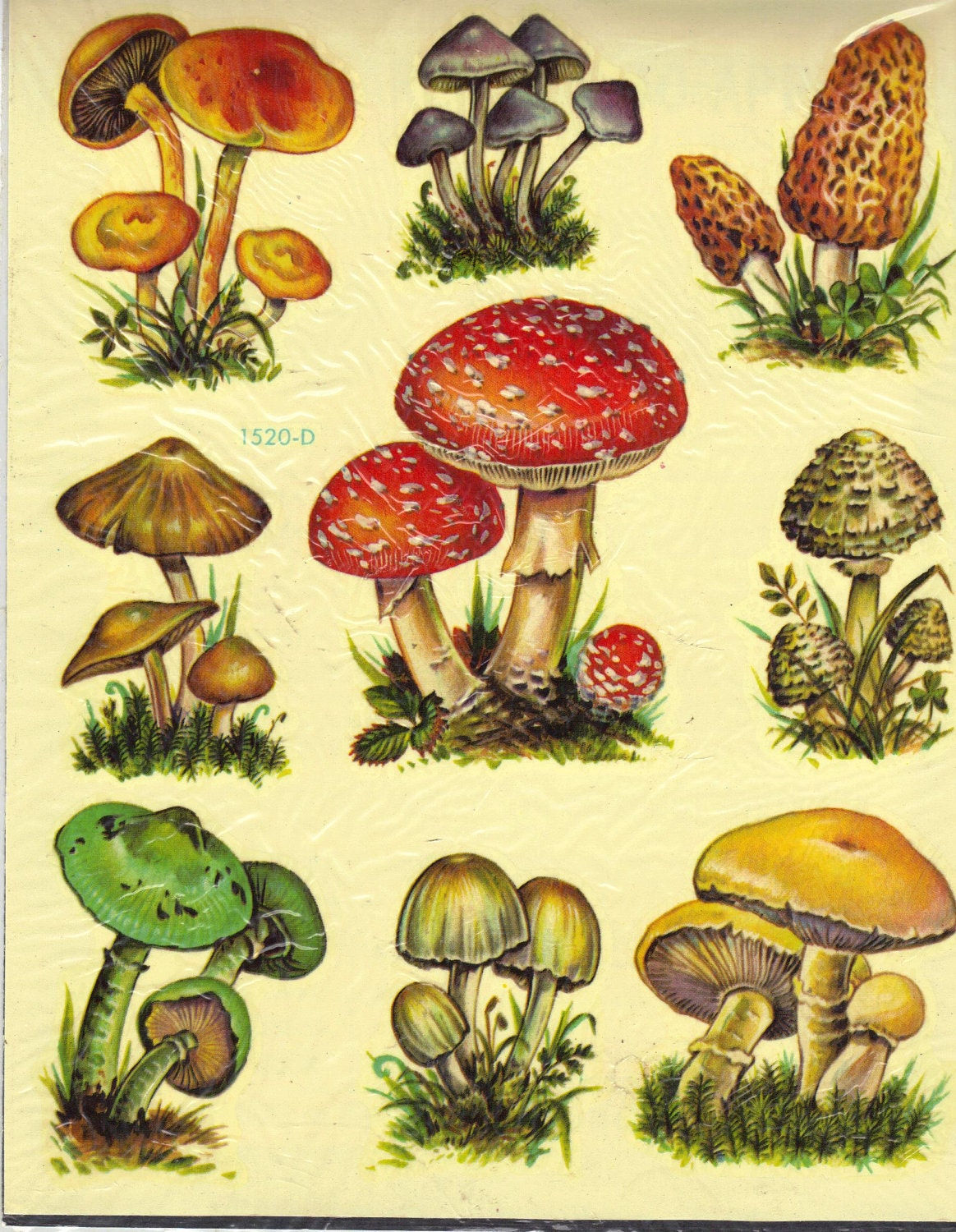Vintage Meyercord Decals Mushrooms Two Waterslide