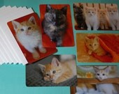 The Drapers - Set of Six Super Cute Kitten Post Cards with Envelopes