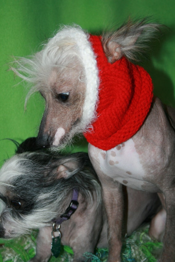 Ready To Ship- 11 inch neck and head-  Santa Red and White Fur Cowl For Pups- Hairless dogs and cats- Holiday Costume