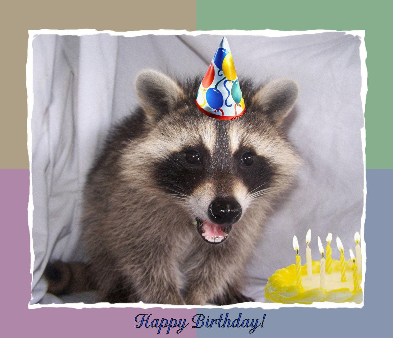 Raccoon Greeting Card Hoover S Birthday Cake