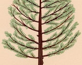 100 percent charitable donation - Cedar Tree - Fine Art Print 8x10 - Arbor Day Foundation