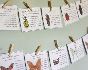 Insect Cards with Moths & Beetles - Digital - Printable PDF