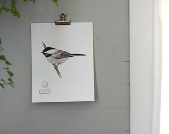 Black Capped Chickadee - Digital - Printable PDF