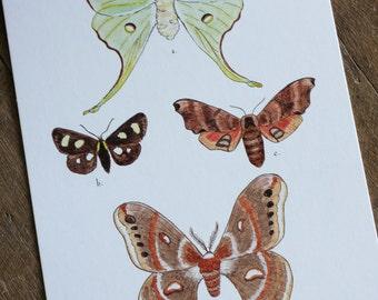 Moth Postcards