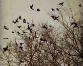Flying Black Birds Art Print - photography neutral hues brown gray dusk autumn evening - 5x7 Vertical Birds at Dusk No. 7254