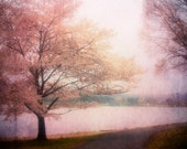 Fairytale - Dream of a Tree (Pink Cherry Blossoms) 8x10 Fine Art Photography Print by Tricia McKellar. No. 9486