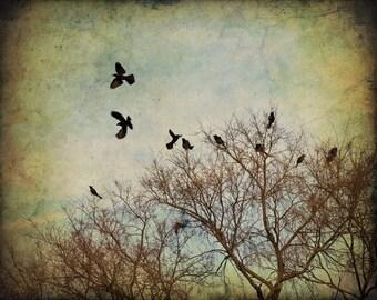 Bird Print - Fine Art Photography Print - Away (Birds in Flight)