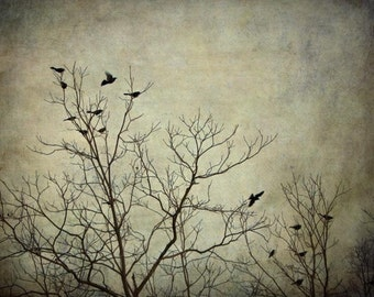 Photograph of Birds in Tree Branches, Eastward, Fine Art Photography Print by Tricia McKellar (Birds in Flight)