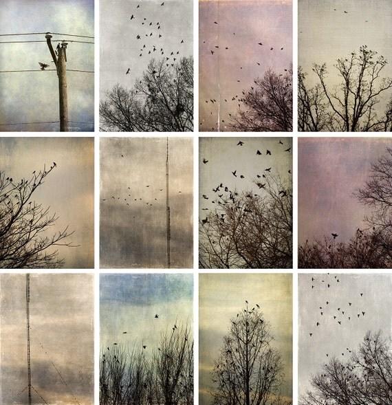 Print Set, 12 Bird Photographs, Fine Art Photographs, 5x7 Vertical Birds at Dusk - fall home decor gray brown blue orchid pink