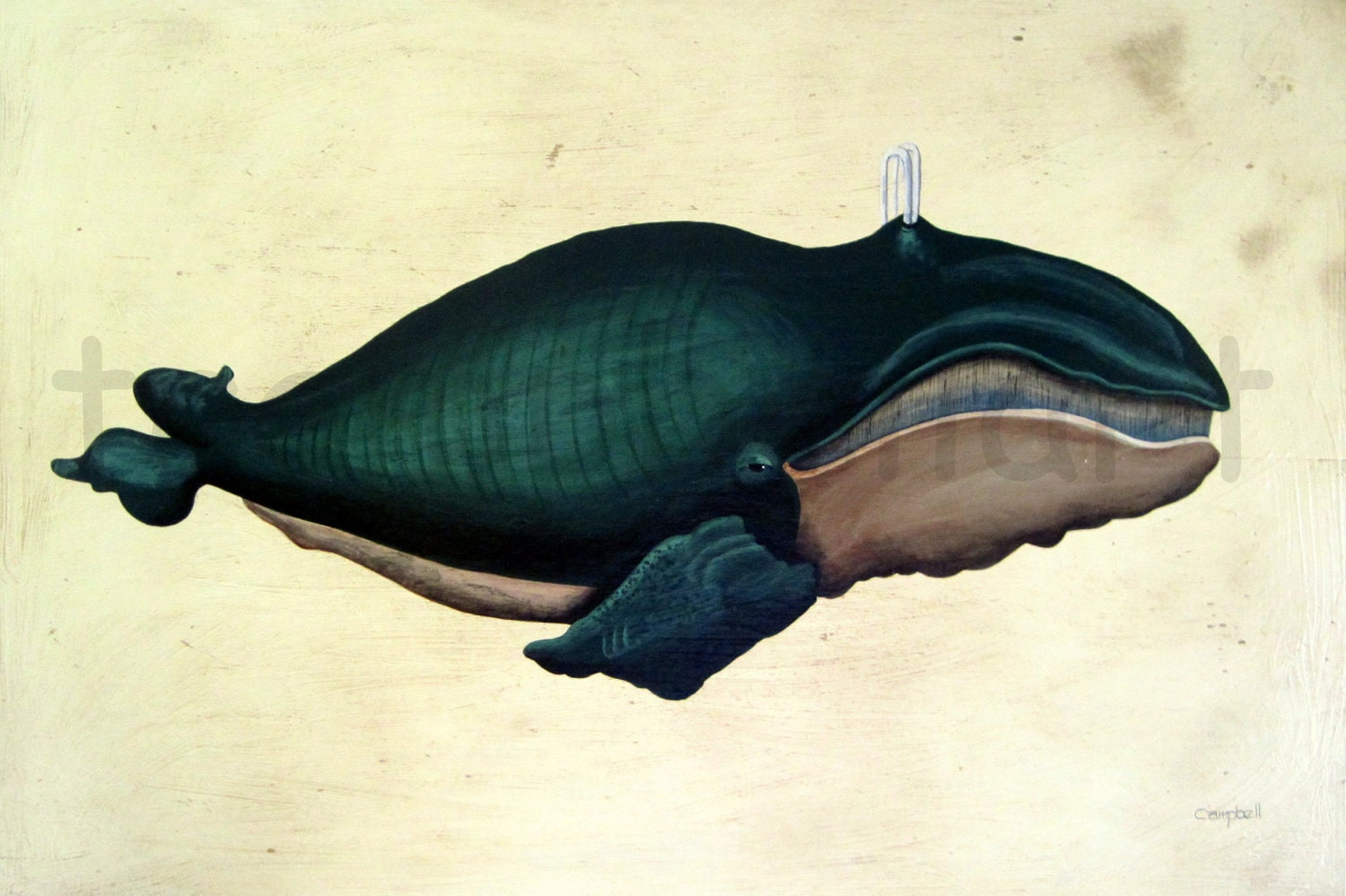 North Atlantic Right Whale Giclee Print by Tim Campbell