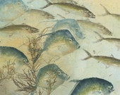 Coastal Cruise- Limited Edition of original gyotaku of Fish from the Gulf of Mexico