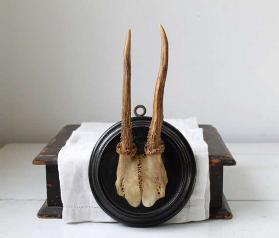 25% off barn sale vintage 1950s roe deer antler trophy on round wood plaque, germany