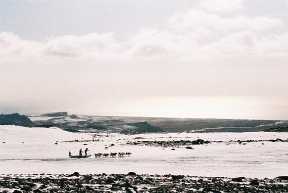 Myrdalsjokull Glacier, Iceland, Dog Sled, Huskies, Photography, Nature Photography, Animal Photography, Wall Art,