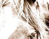 Horse close-up digital download