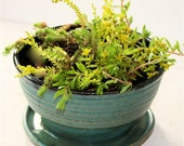Indoor Planter for Houseplants, Succulents and Cactus in Cerulean Blue