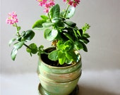"""Grass Green Stoneware Planter with  Built in Drainage 5"""" by 4.5"""""""