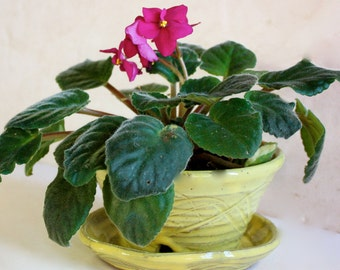 African Violet  Stoneware Planter for Small House Plant  Three Inches Tall by Six Wide