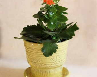 Yellow  Stoneware Planter with Carved Decoration and Built in Drainage
