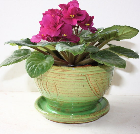 Indoor Ceramic Planter with Green Glaze and Surface Carving