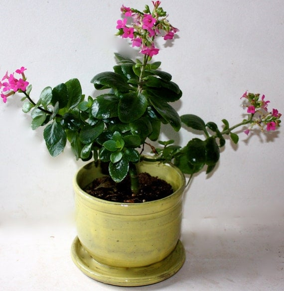 Succulent,  Stoneware Planter for Small House Plant Four Inches Tall by Five Wide
