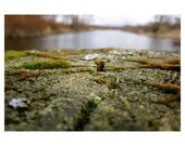 Moss Along The River