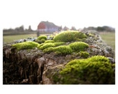 Country Moss