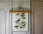 Warblers - Redstart and Magnolia - Antique Book Plate - 1914