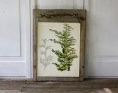 Vintage Flower Plate  - Golden Hinoki Cypress - Shrub and Tree Studies