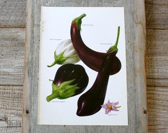 Vintage Print  - Eggplant - Book Plate  - 1965